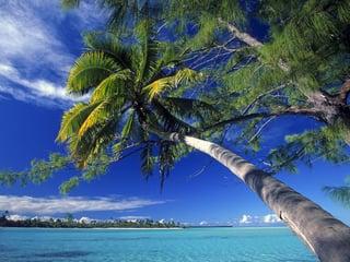 palm_tree_society_island_beach-normal.jpg