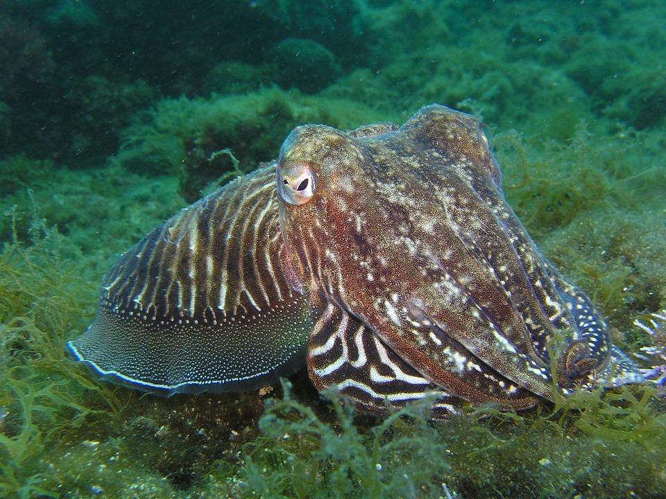 squid-225423_960_720