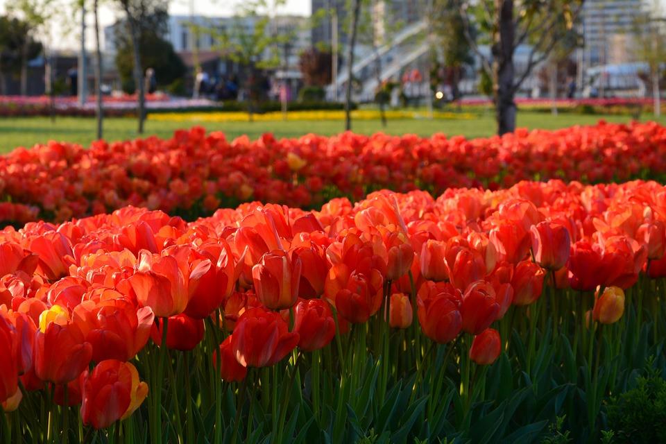 flower-3314283_960_720